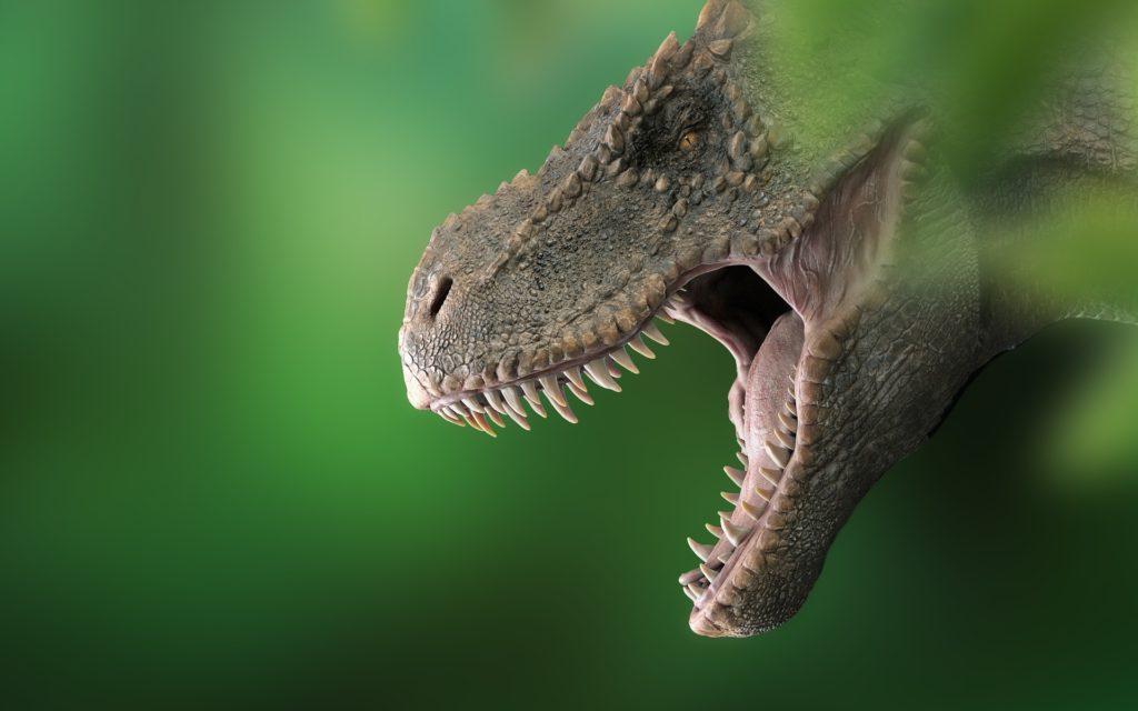Meet Tea-Rex: A Short Documentary